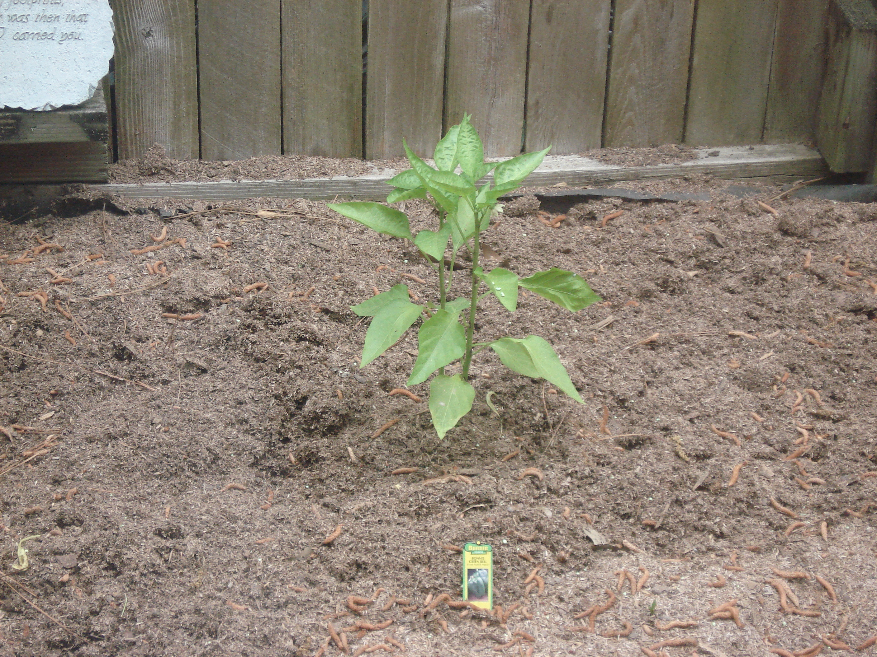 Growing your own food allergy friendly garden the food allergy mom - Planting pepper garden ...